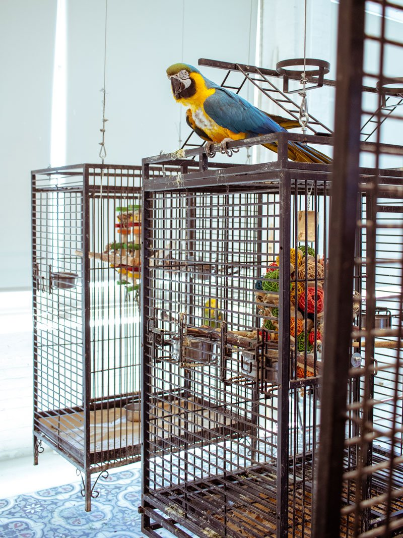 One of the parrots in Hunt Slonem's 33,000-square-foot Brooklyn studio.